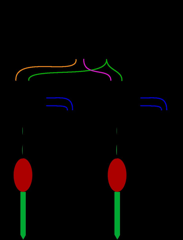 [SCHEMATICS_4FD]  VG-RELAY-AC: 24VAC Sprinkler Relay Board   24vac Wiring Diagram      Vegetronix